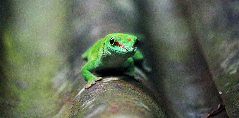 naturfotografie naturfotograf gekko