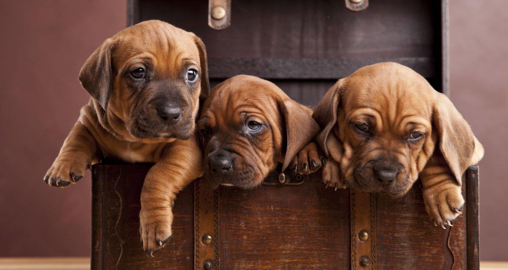 Tier Fotoshooting – Tierfotograf finden und Tierfotografie Tipps