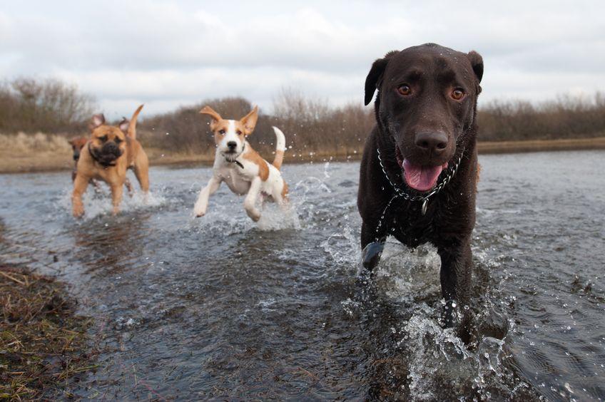 tierfotografie tier fotoshooting hund natur tipps