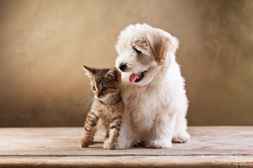 tierfotografie tier fotoshooting katze hund tipps