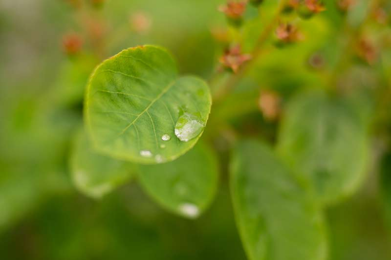 regen-fotografieren-regenbilder-natur