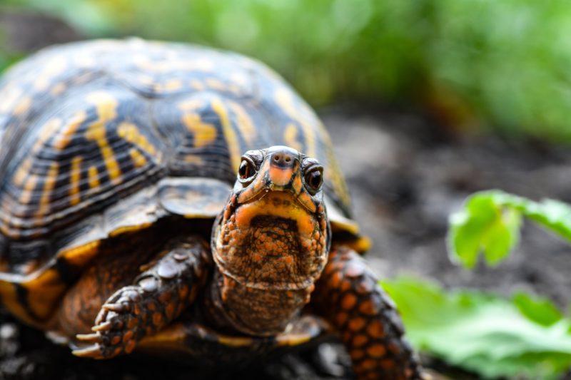 tiere fotografieren kameraeinstellungen schildkröte