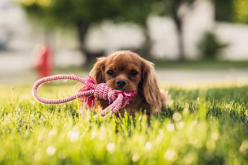 tierfotografie tipps hunde belohnen