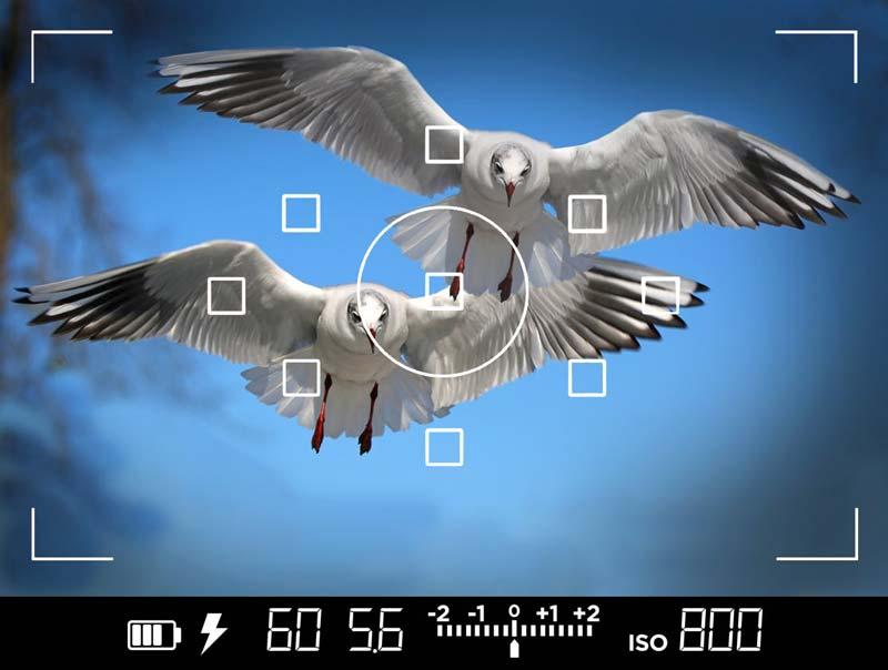 autofokus-punkte verstehen fotografieren