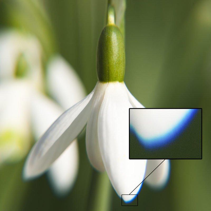 Chromatische Aberration Blume