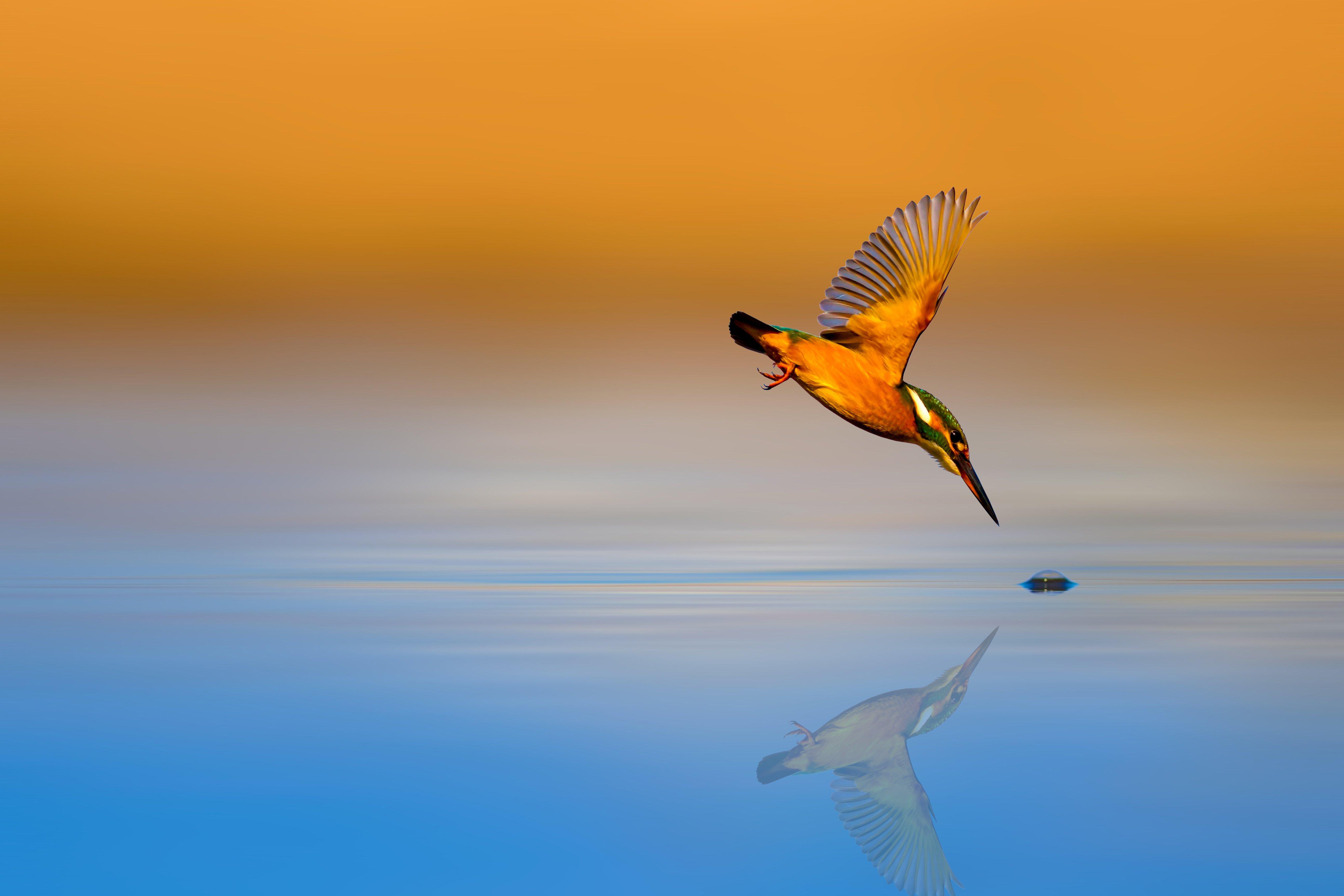 Belichtungszeit Fotografie Grundlagen fliegender Vogel