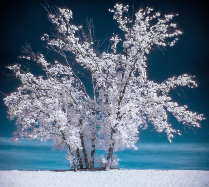 Infrarotfotografie Baum