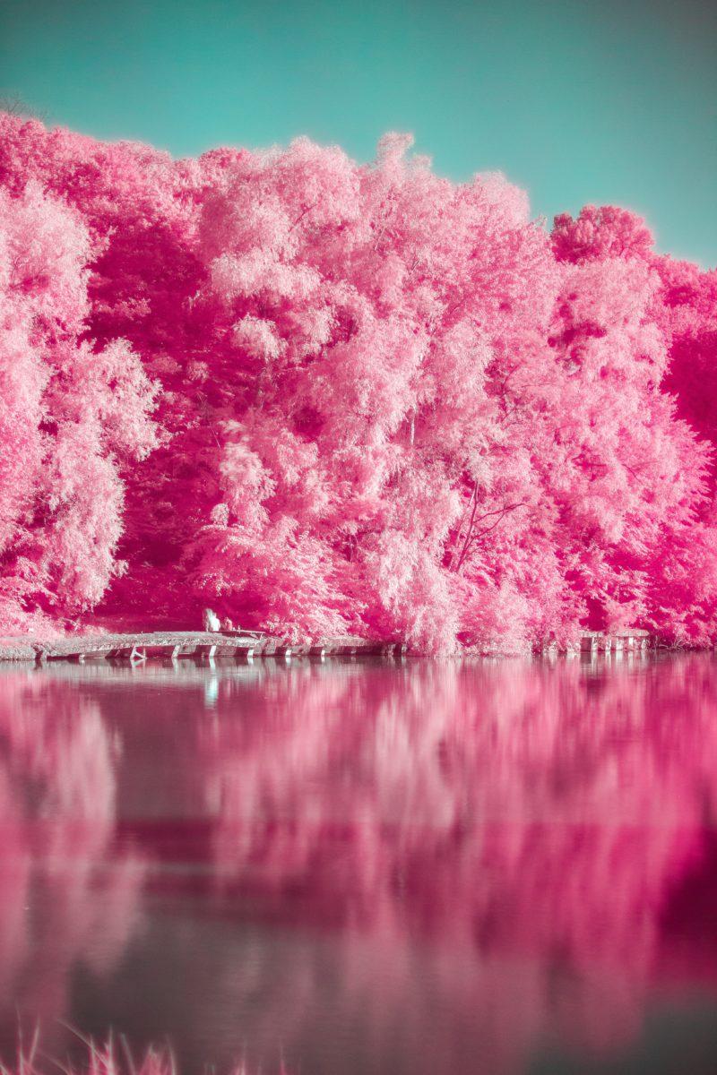 Infrarotfotografie Pink