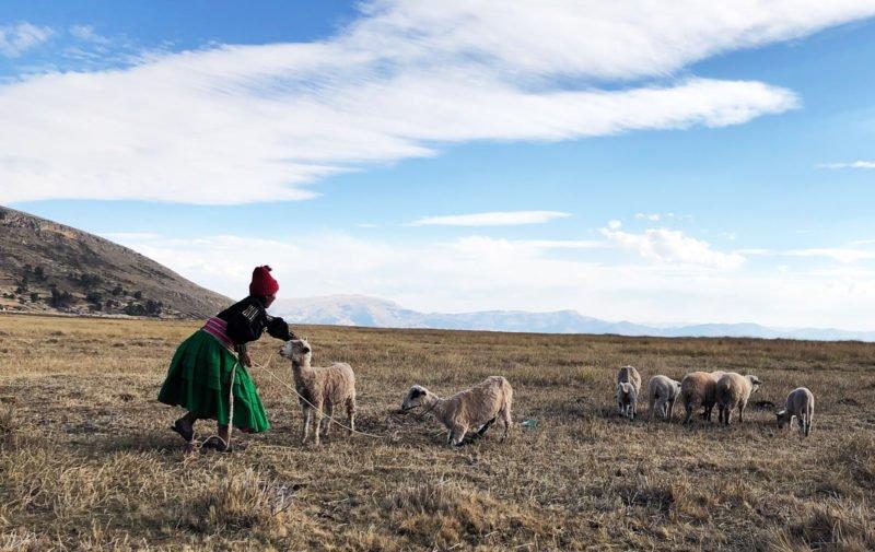 Frau mit Schafen in Peru