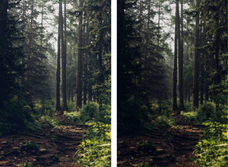 Minimalismus Fotografie Vergleich Wald