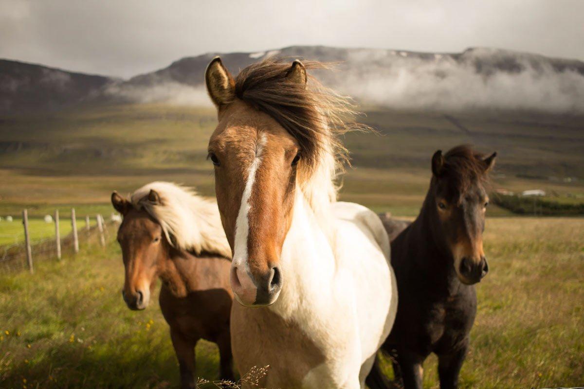 Pferdefotografie Ratgeber und Tipps