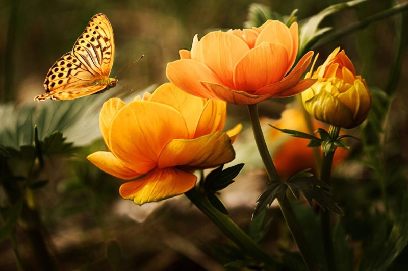 Fotografie Grundlagen Natur fotografieren