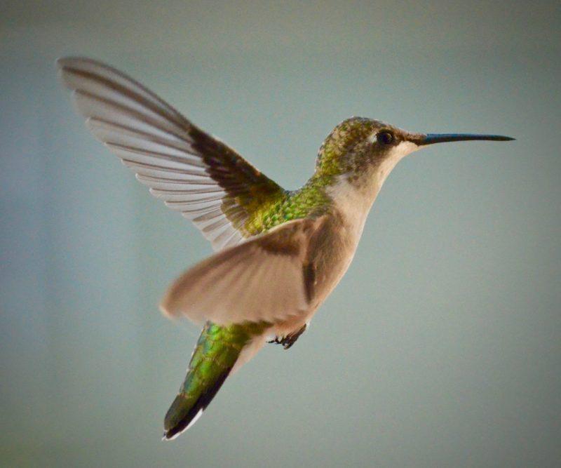 ISO Kamera fliegende Vögel