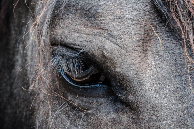 Pferdefotografie Detailaufnahme Auge