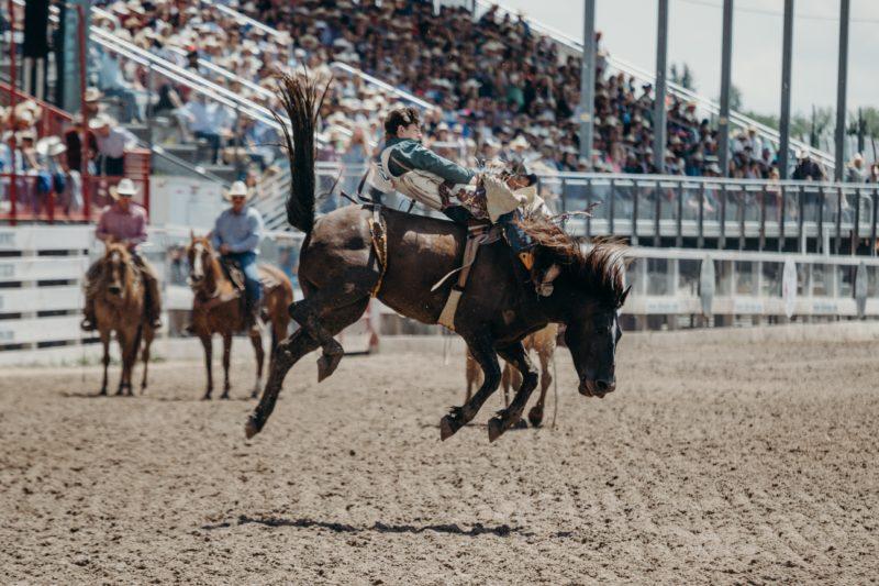 Pferdefotografie Autofokus
