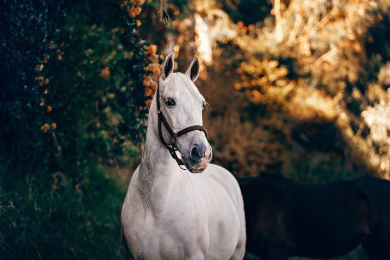 Pferdefotografie Negativer Raum