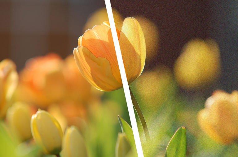 BIldrauschen-Blumen-Titel-bearbeitet.