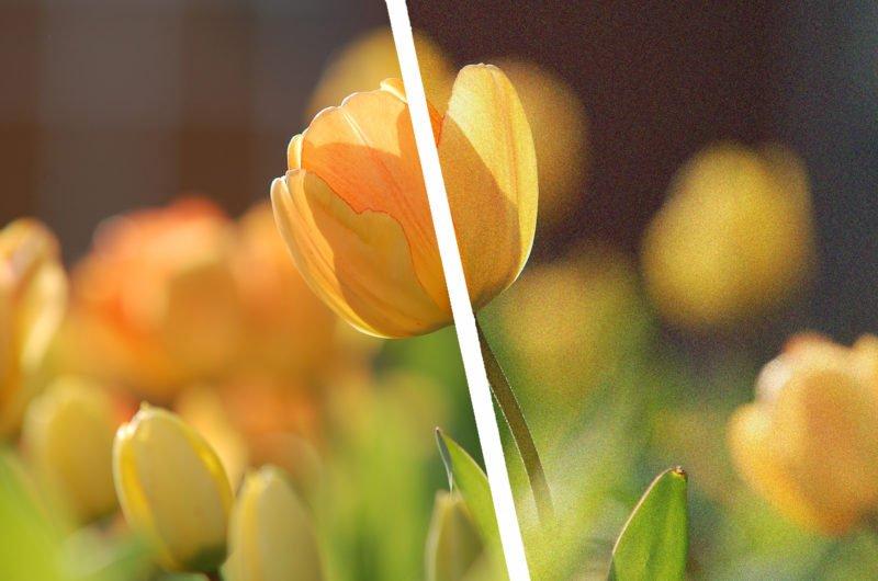 BIldrauschen Blumen Titel bearbeitet