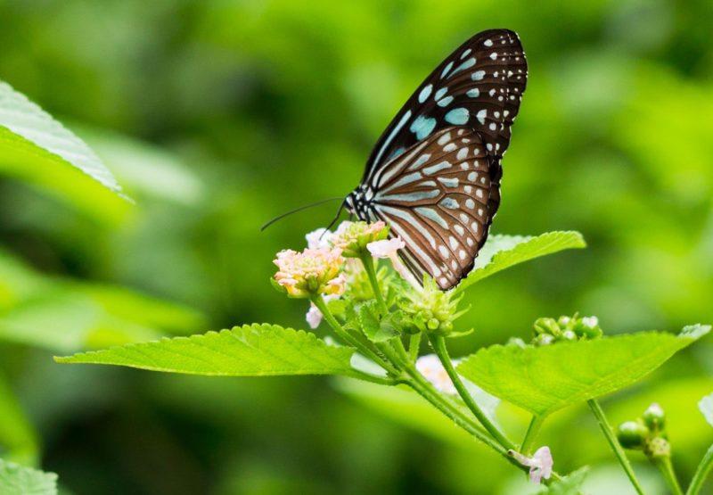 Blumen fotografieren - Blüte mit Schmetterling