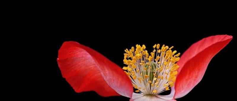 Blumen fotografieren Titelbild