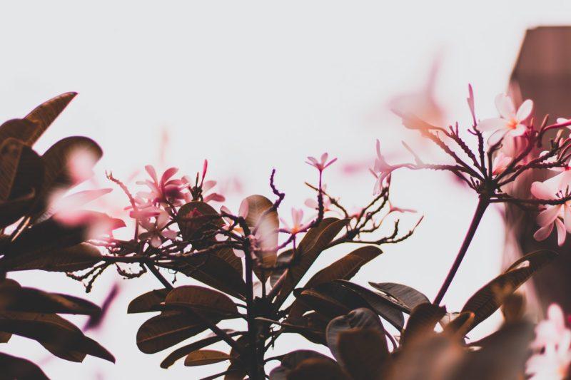 Blumen fotografieren mit Gegenlicht