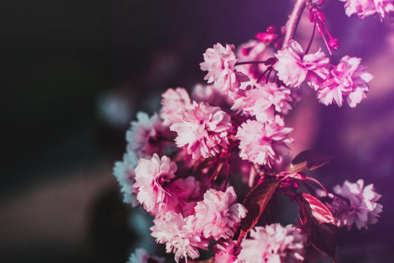 Blumen fotografieren mit Licht und Schatten