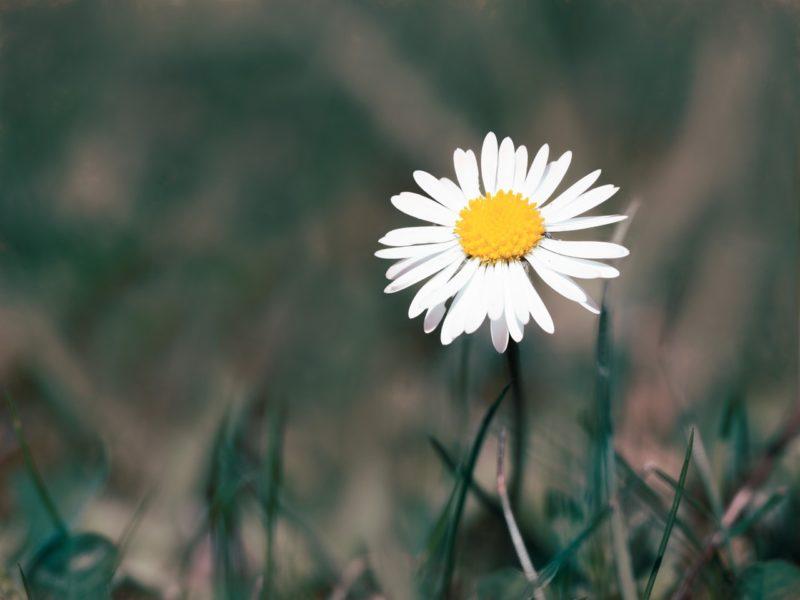 Blumen fotografieren mit Gefühl