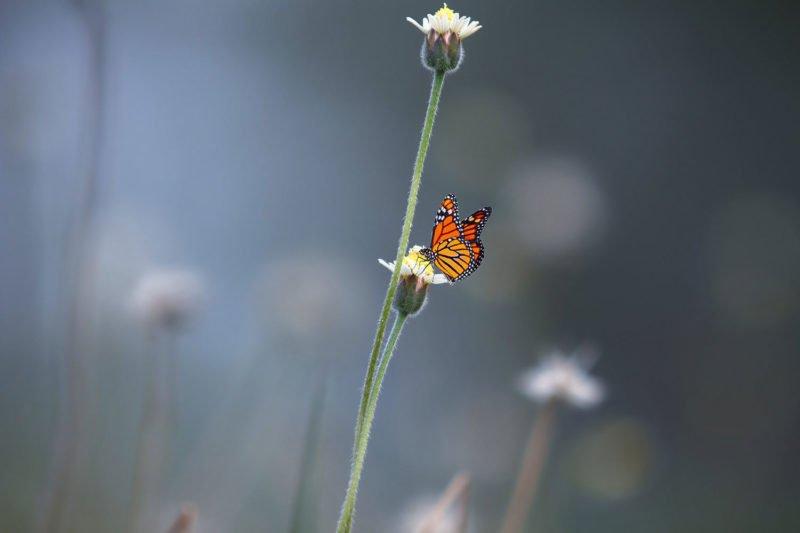 Ein Schmetterling. Negativer Raum.