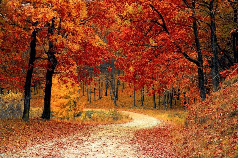 Positivem Raum ein Wald mit vielen Blättern