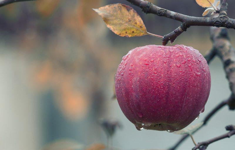 Makroaufnahme eines Apfels