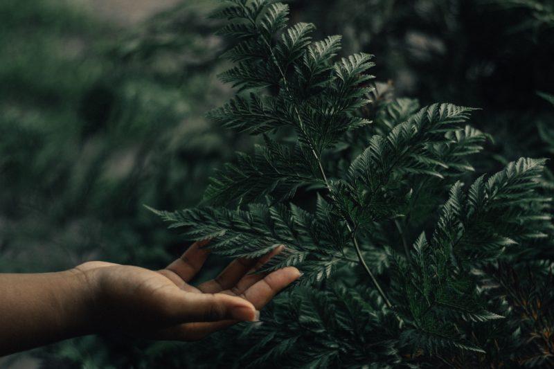 Naturaufnahme mit einer Hand die ein Blatt hält