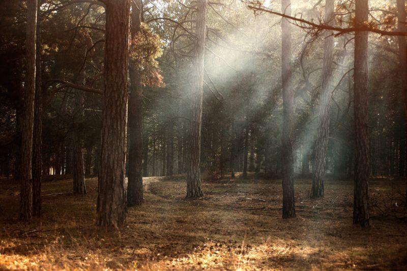 Lichteinfall in einen Wald in der freien Natur