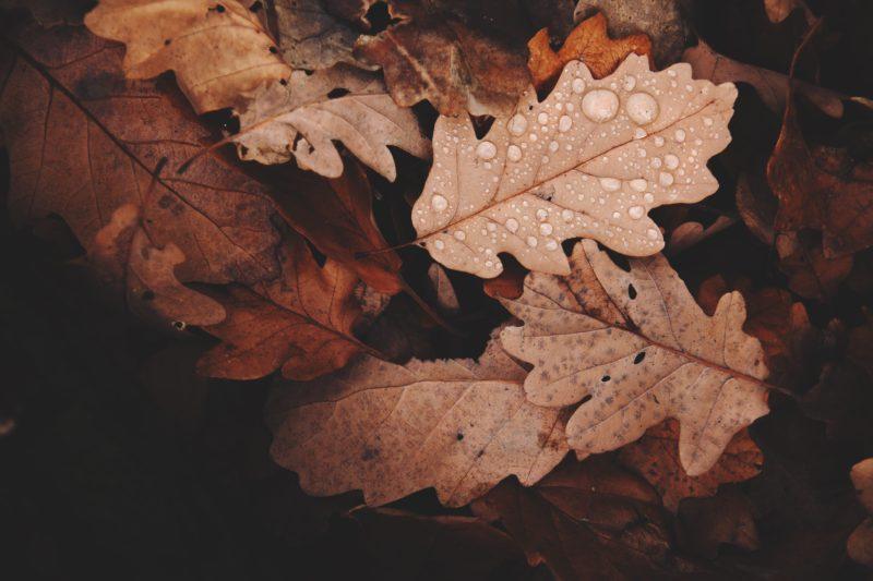Nahaufnahme von Herbstblättern