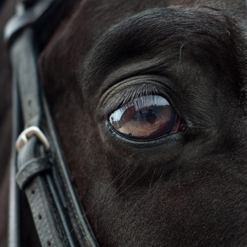 Spiegelungen fotografieren - Tierauge