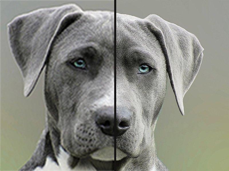 Bild verkleinern Kompression Vergleich Hund