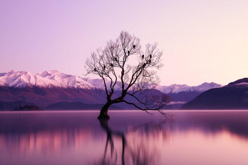 Fotografie Tipps Einfachheit Baum Blaue Stunde
