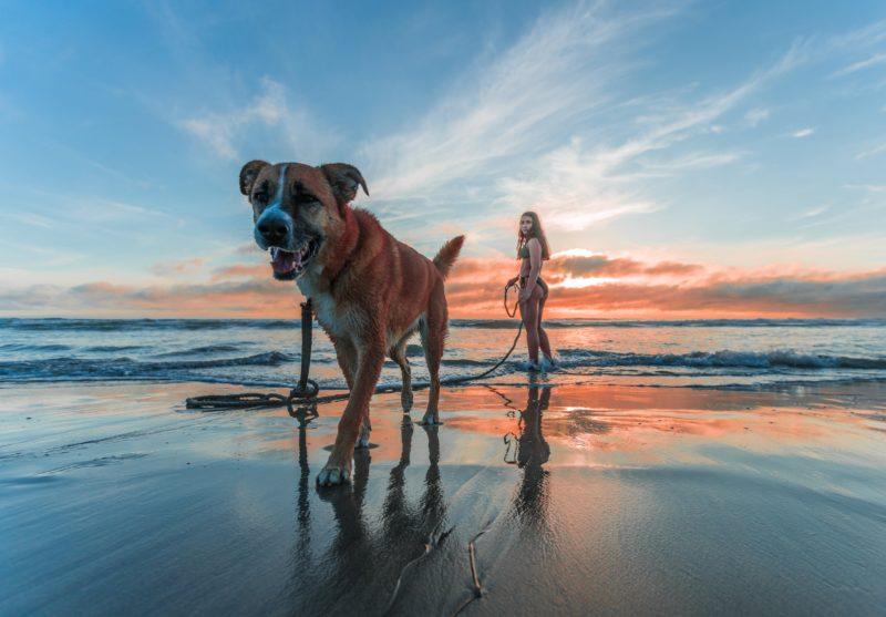 Hund und Frau am Strand Tipp Foto Perspektive