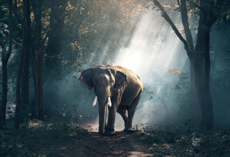 nachbearbeitung elefant im wald