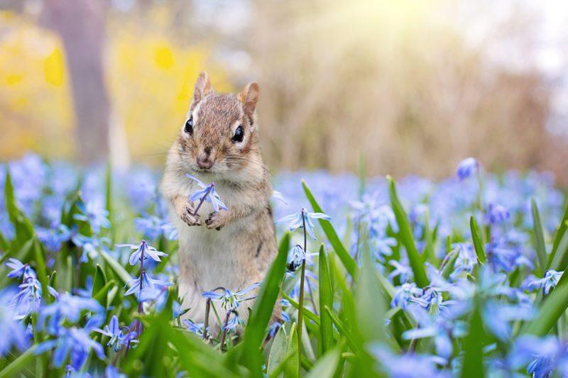 Eichhörnchen Blende F4 Fotografieren