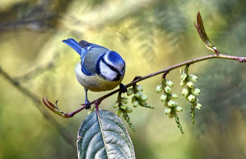 vogel fotografie sitzend auf einem ast