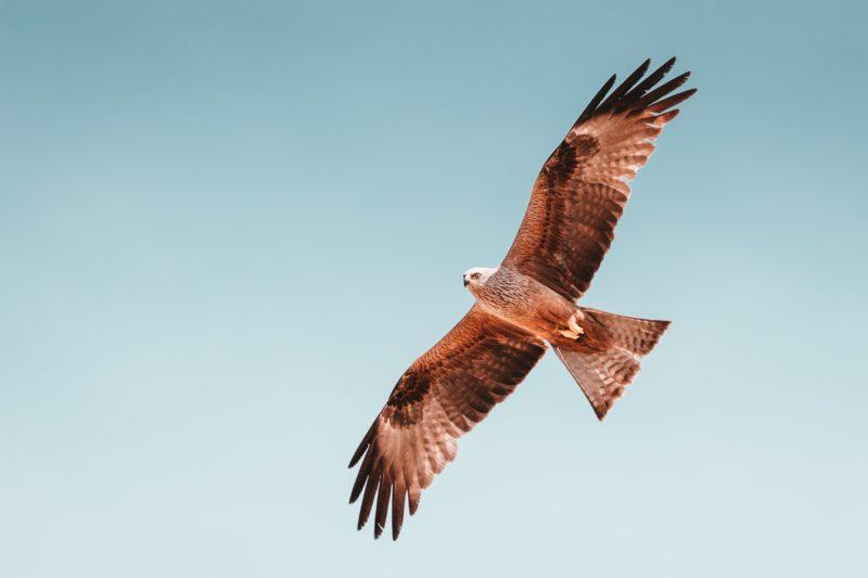 vogel fliegt am himmel