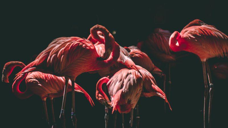 vogel fotografie flamingos im dunkeln