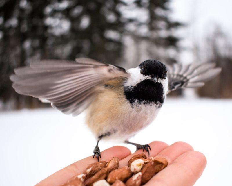 vogel fotografie von einem vogel auf der hand mit futter