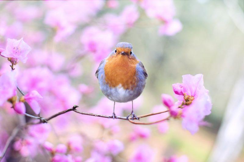 vogel sitzt auf einem ast mit blumen umgeben
