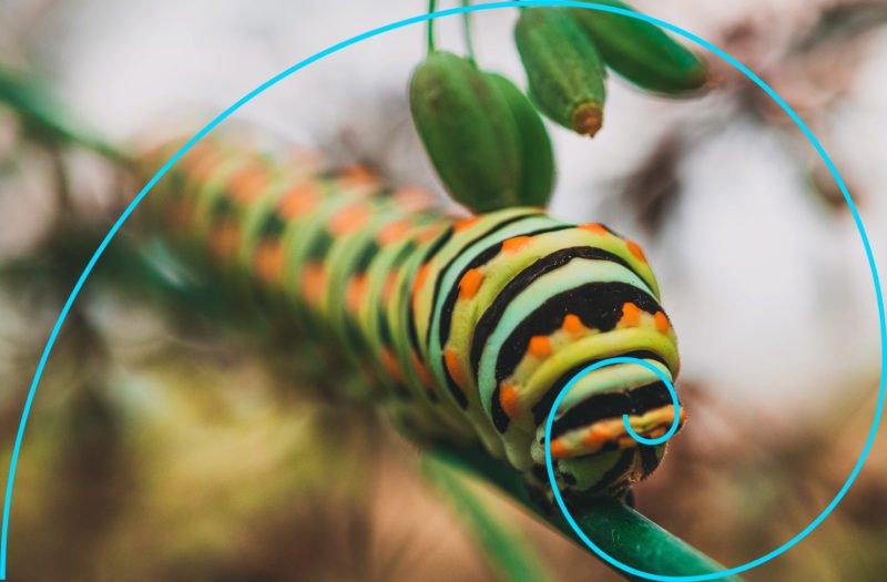 beispiel fibonacci fotografie