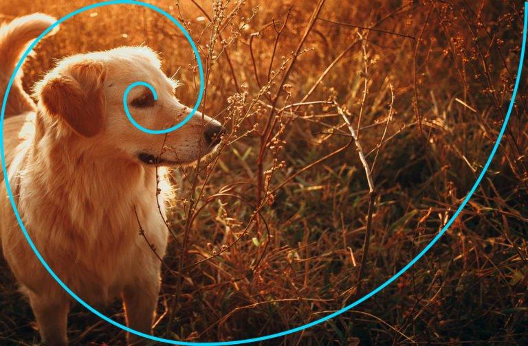 ibonacci spirale fotografie anwenden