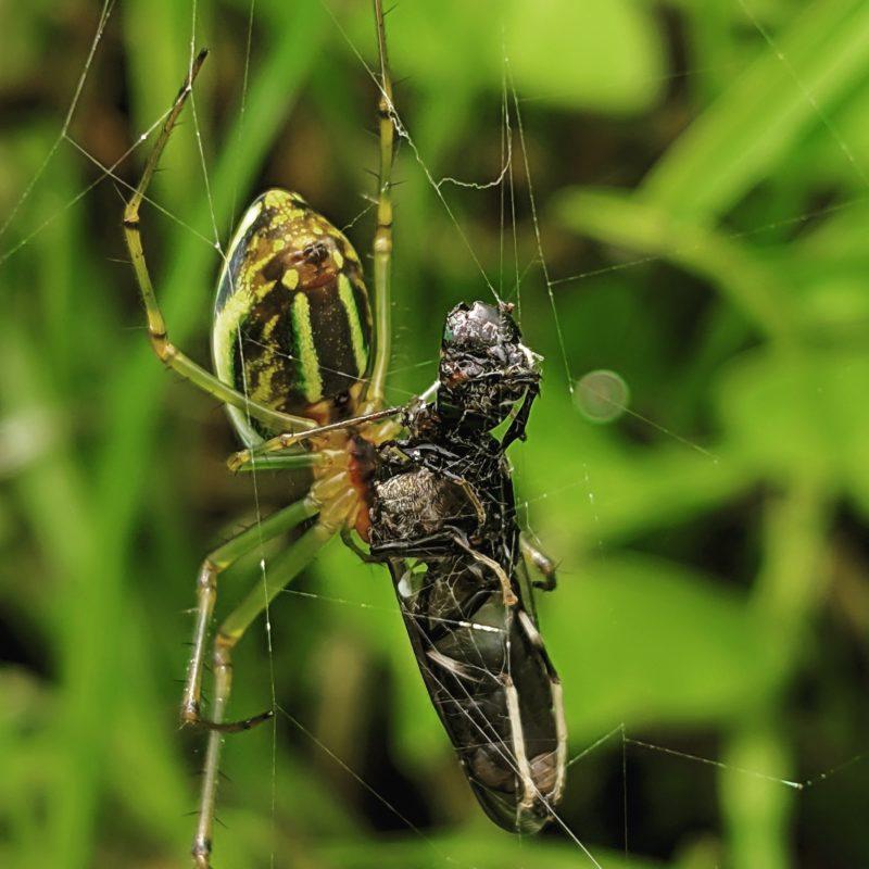 insektenfotografie aktion