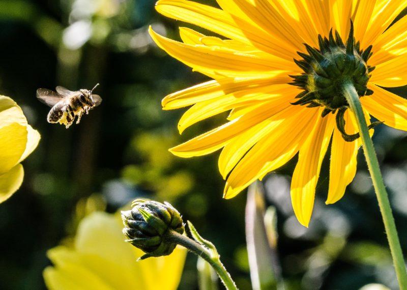 insektenfotografie bewegung