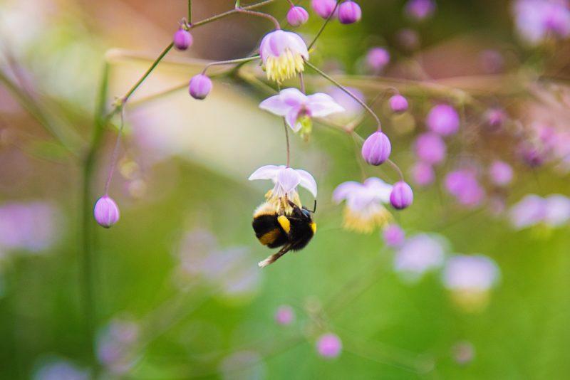 insektenfotografie tiefenschärfe