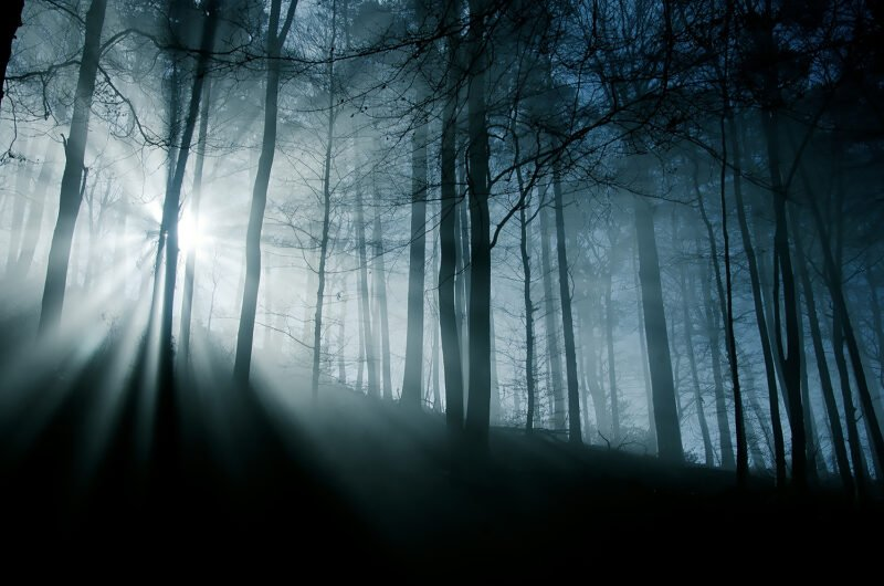 mystische naturfotos baeume im wald mit sonne im hintergrund